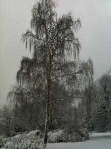 Imbolc Frost